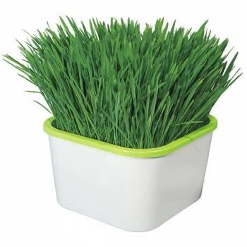 Проращиватель семян Здоровья Клад Аэросад (для микрозелени)