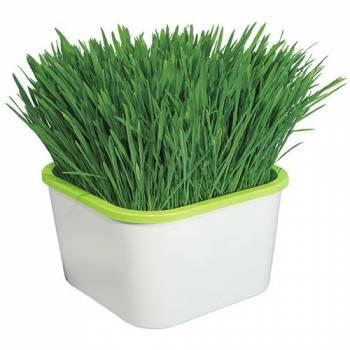 Проращиватель семян Здоровья Клад Аэросад (для зеленой травки)