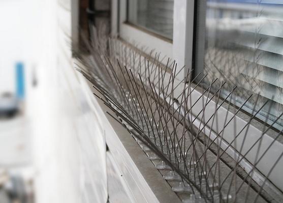 Установленные на карнизе за окном антиприсадные шипы
